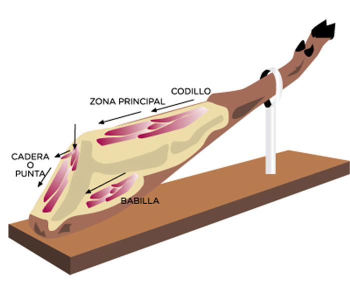 Dibujo de las partes que componen un jamón para cortar un jamón de forma correcta